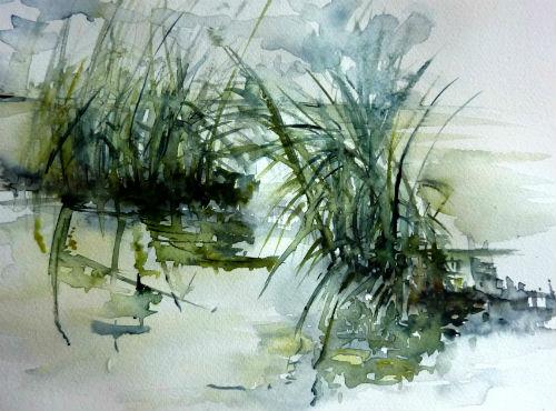 lumière dans les roseaux étang